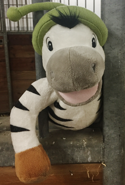 Zebra Fortbildung